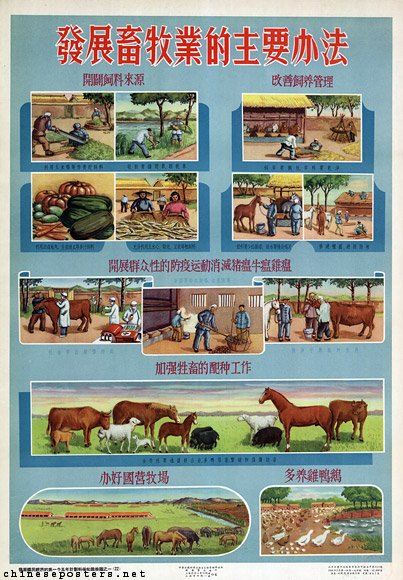 Important methods to develop animal husbandry, 1956