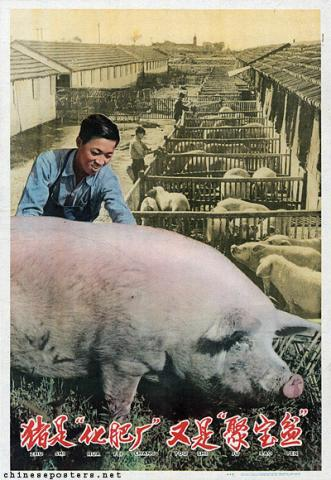 "Pigs are ""fertilizer factories"" as well as ""treasure bowls"""