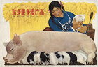 More pigs, more fertilizer, higher grain production, 1959